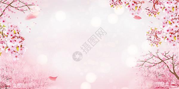 赏樱花海报图片