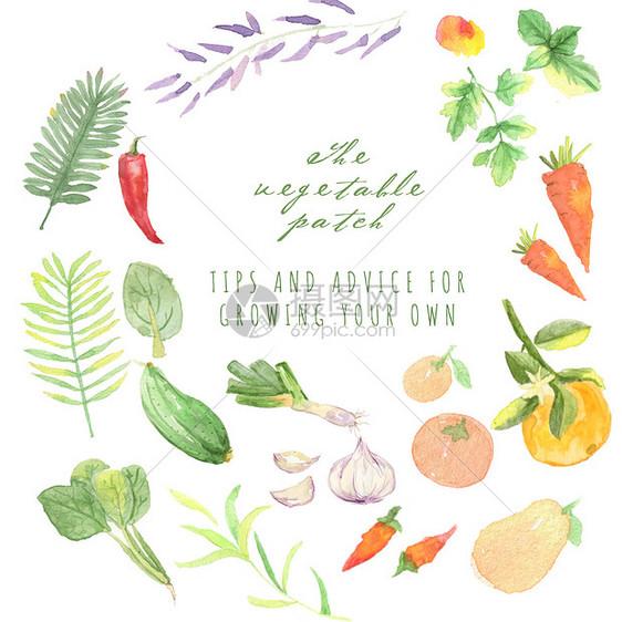 手绘水彩水果蔬菜