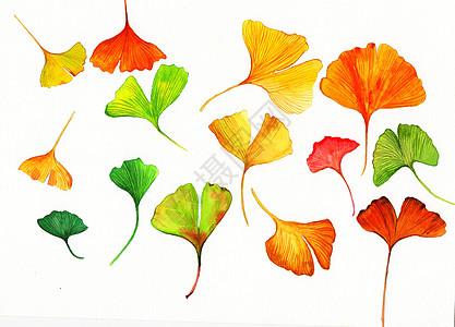 水彩手绘银杏叶高清图片