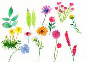 水彩手绘植物图片