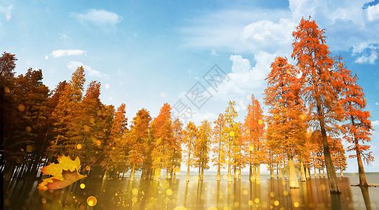 唯美树林素材图片