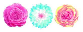 水彩手绘花卉图片