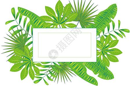 矢量热带植物绿叶高清图片