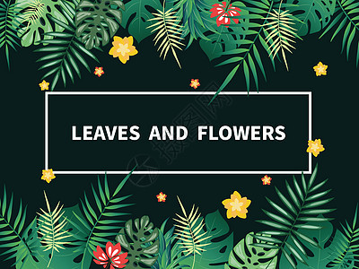 热带绿色植物背景图片