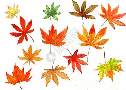 水彩手绘枫叶高清图片