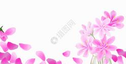 粉色花卉背景图片