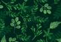 叶植物背景图片