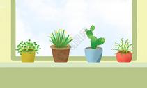 盆栽植物背景素材图片
