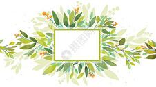清新植物背景图片