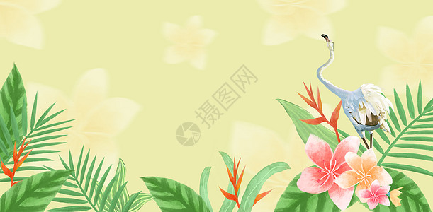 热带植被背景素材图片