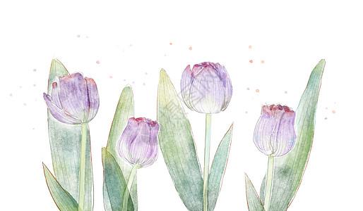 水彩郁金香花卉素材图片