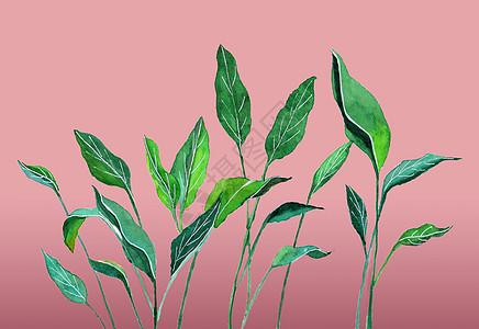 ins风植物叶子高清图片