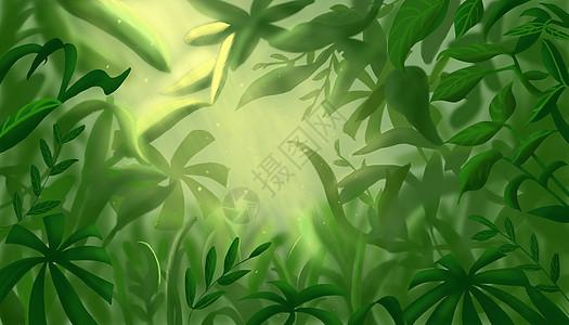 森林植物背景图片