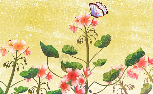 唯美花卉植物图片