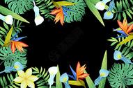 黑底热带花卉元素背景图片
