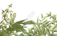 水彩热带叶子背景图片