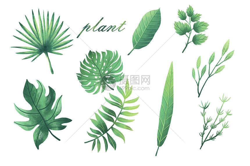 清新植物元素合集图片