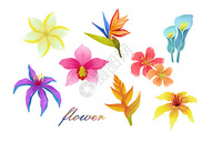 清新花卉元素合集图片
