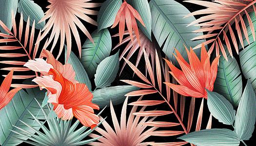 花卉热带植物背景图片