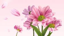 花卉背景400126697图片