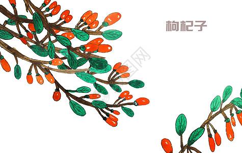 手绘水彩中药材枸杞子高清图片