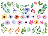 水彩花卉素材图片