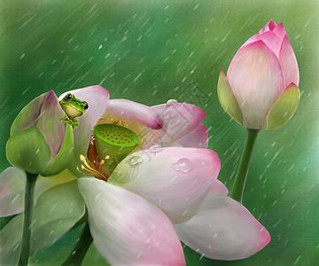 夏天雨中荷花图片