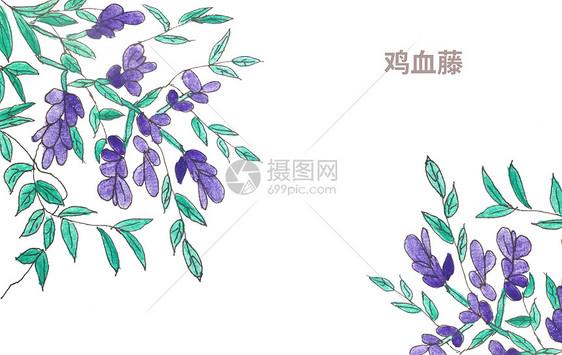 手绘水彩中药材鸡血藤图片素材_免费下载_psd图片格式