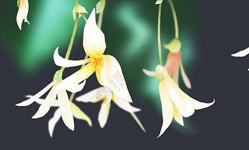 纸浮雕花卉图片_纸浮雕花卉素材_纸浮雕花卉高清图片