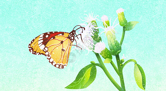 花儿与蝶儿图片