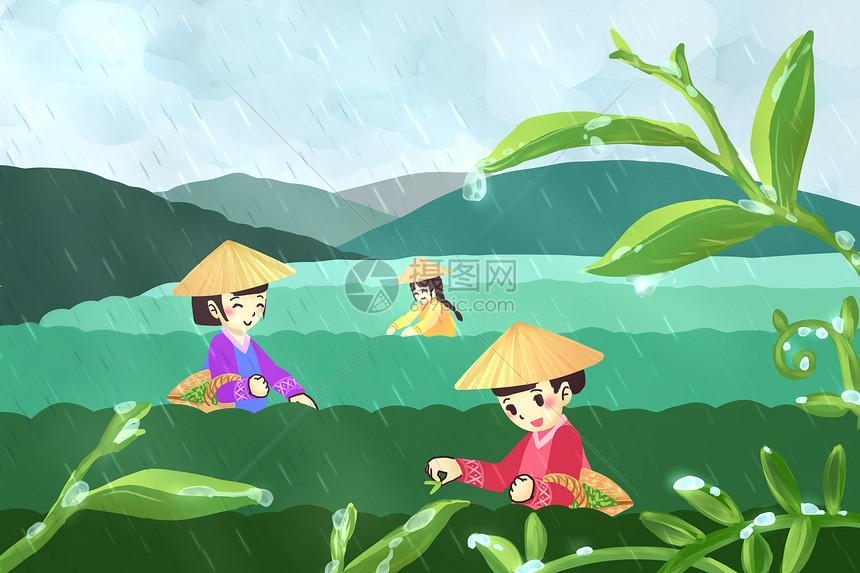 谷雨采新茶图片