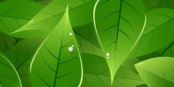树叶背景图图片