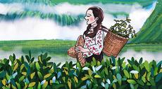 采茶的姑娘图片