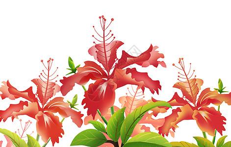 雨林花朵图片
