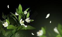 花卉插图图片