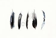 手绘水彩羽毛图片