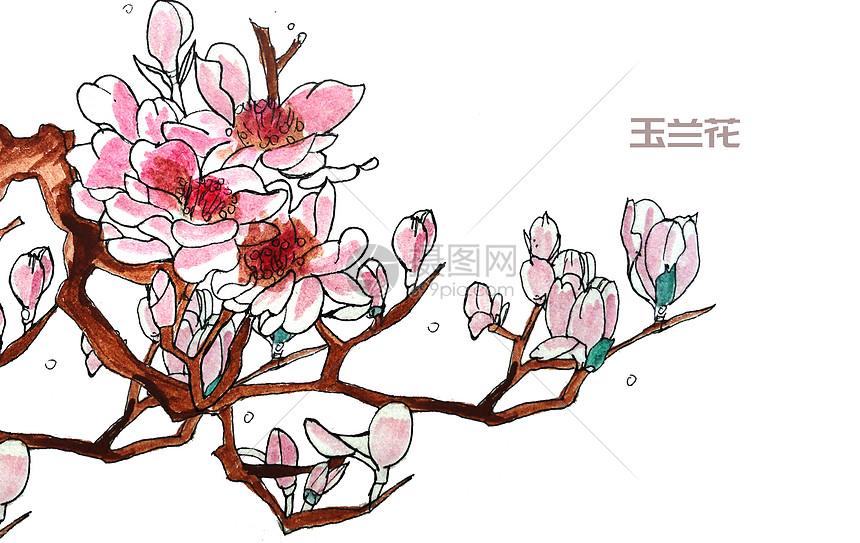 手绘水彩玉兰花图片