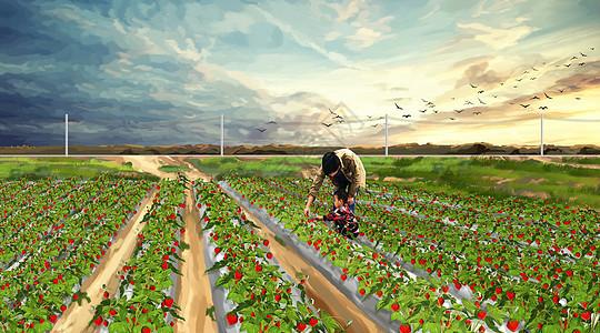 草莓园摘草莓的父子图片