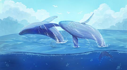 海面上的鲸鱼图片