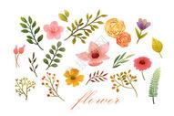 花卉植物元素集合400130571图片