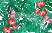 手绘 水彩 热带植物图片