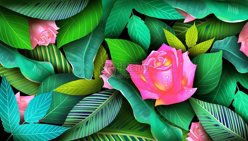 玫瑰花卉背景图片