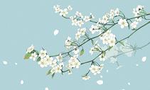 梨花背景图片
