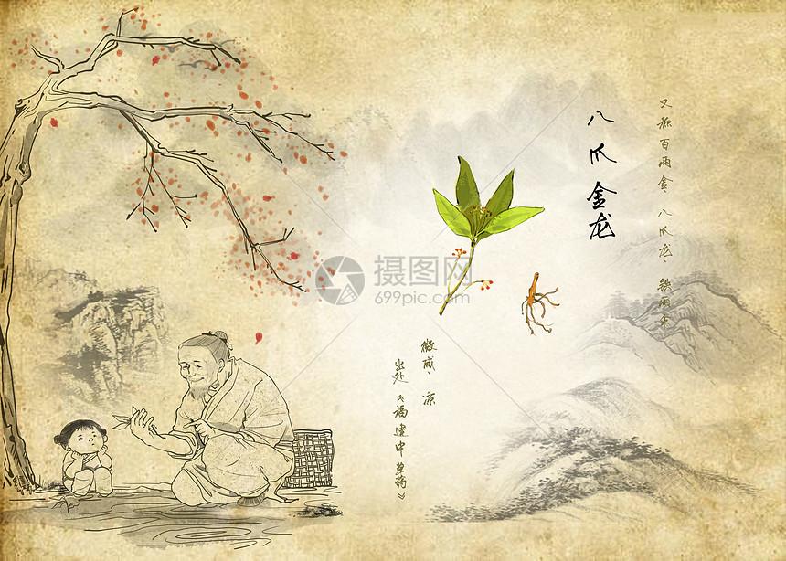 中草药图片