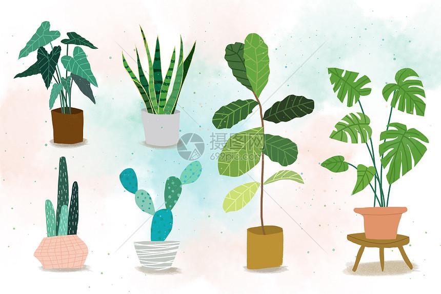北欧风格植物图片