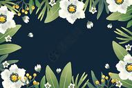 唯美黑底白色花卉背景图片
