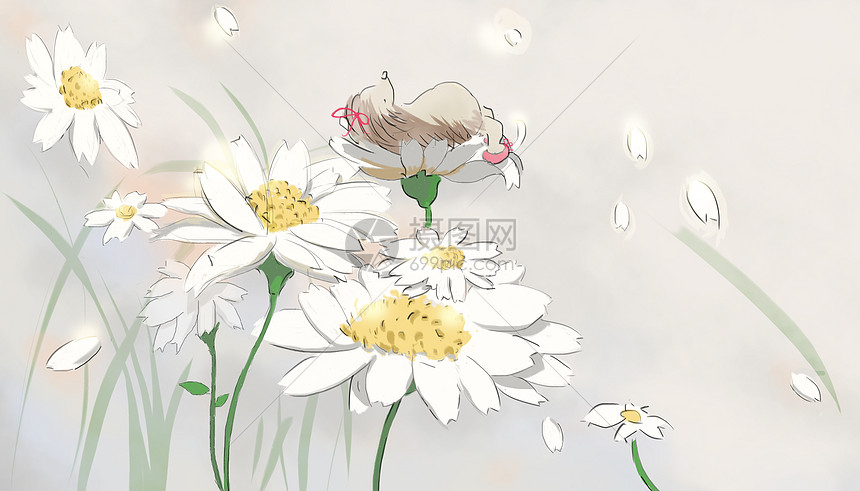 夏天的雏菊图片