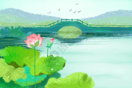 池塘荷花图片