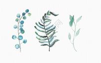 手绘叶子热带植物素材图片