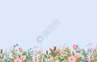 康乃馨花朵图片